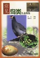 常见鸟类生态图集